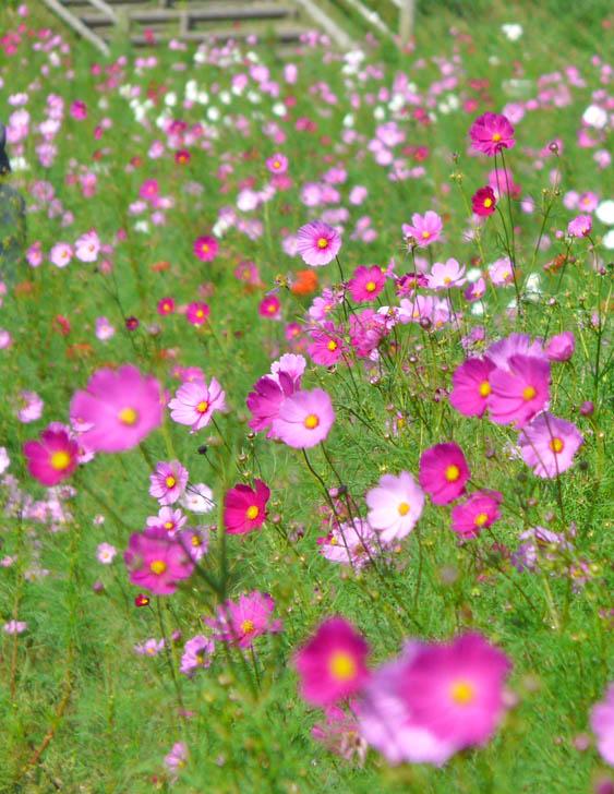 081013花の国2-3