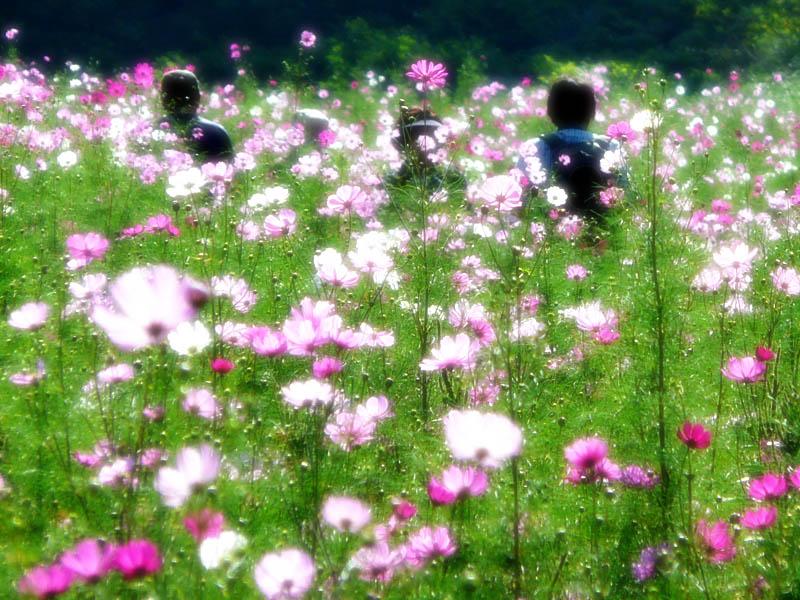 081013花の国2-4
