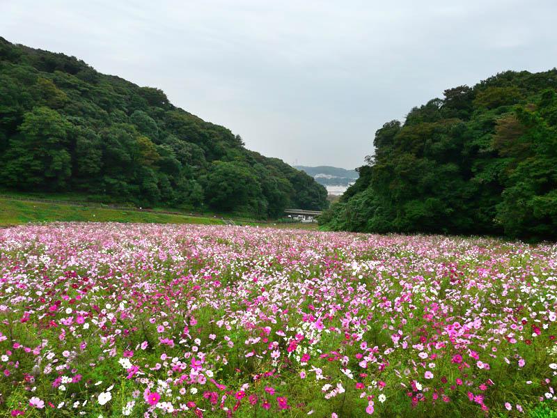 081026花の国1