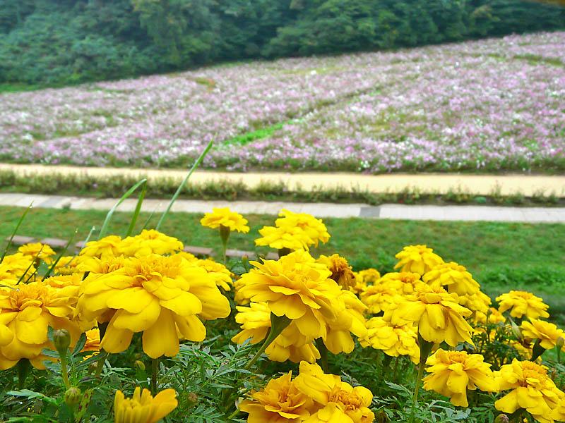 081026花の国3