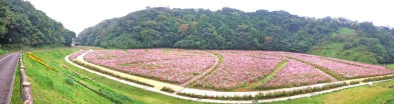 081026花の国4