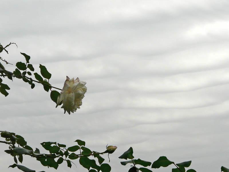 081026花の国5