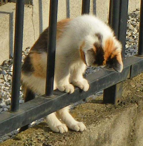 081101反省する子猫1