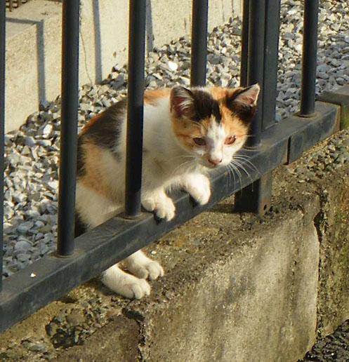 081101反省する子猫2