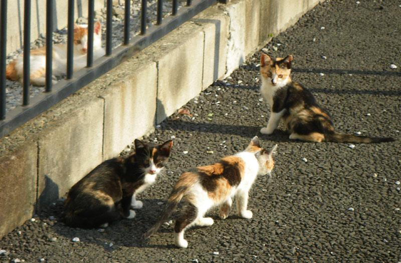 081101反省する子猫3