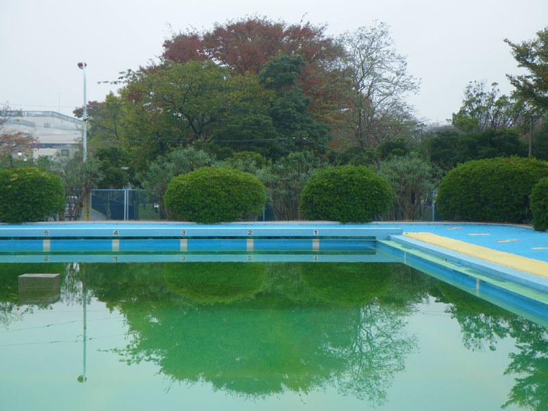 081116久里浜公園プールのいちょう3
