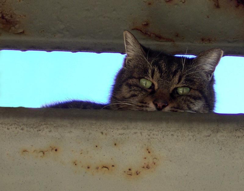 051215階段ネコ