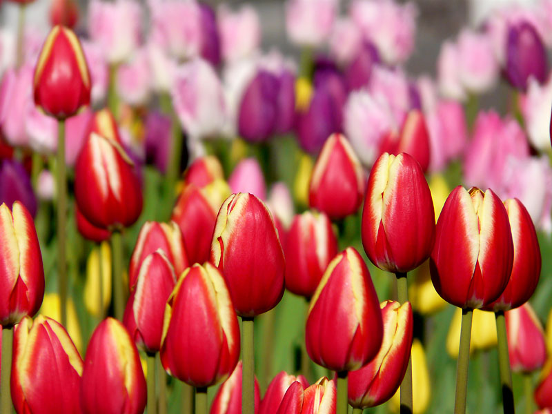 081223今日の花の国1