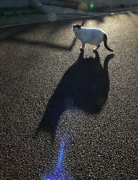 090201影猫2