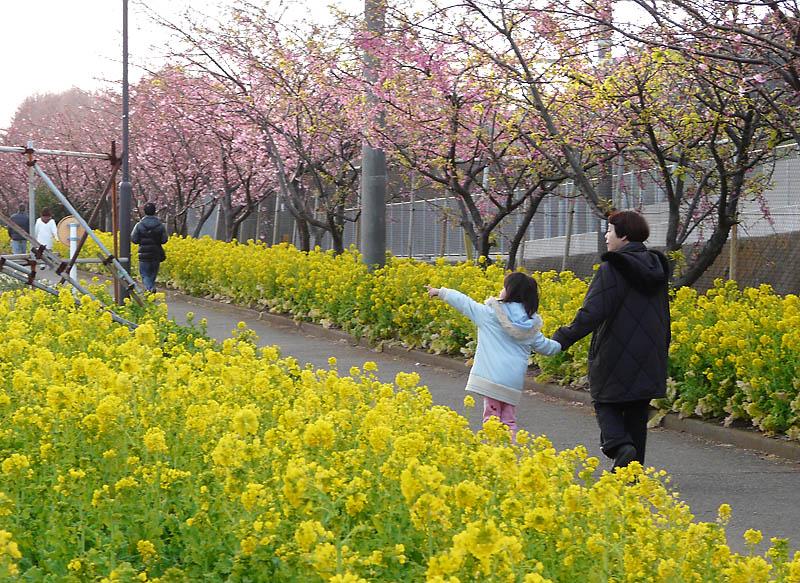 090211河津桜5