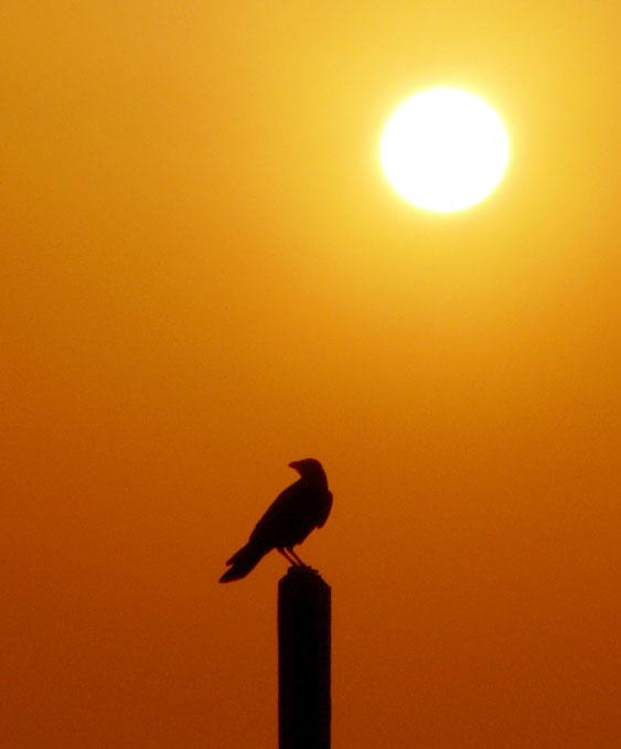 090214荒井浜夕陽3