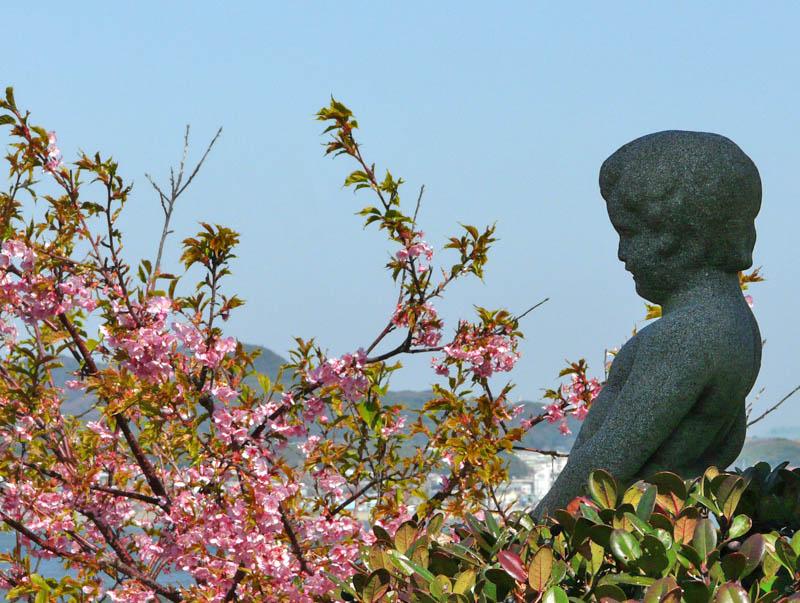090221海と三浦の河津桜4