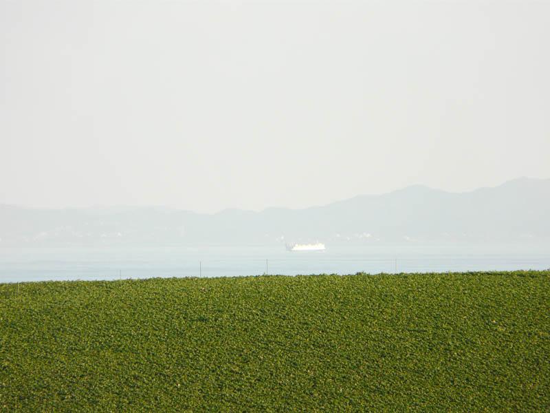 090221空陸海大根畑1