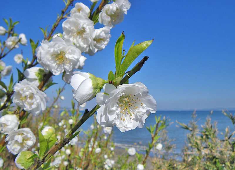 090221海と花1