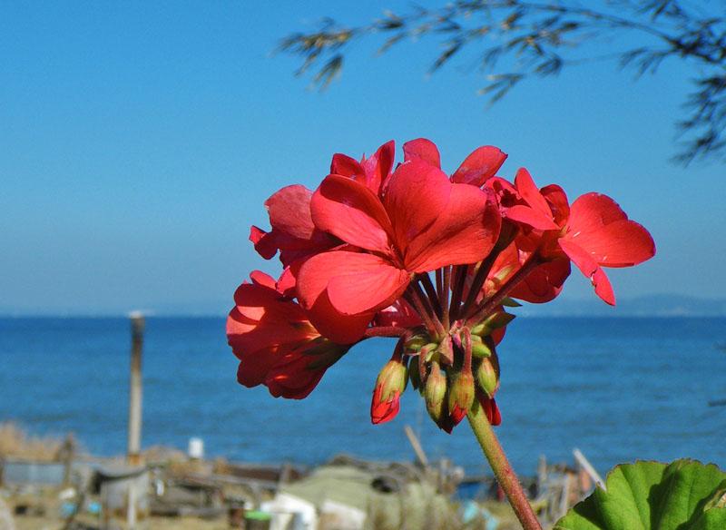 090221海と花2