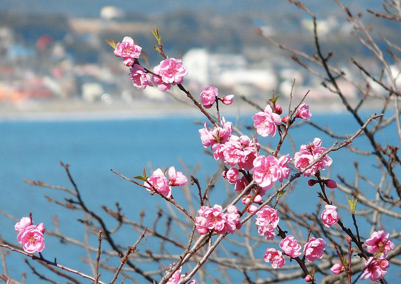 090221海と花3