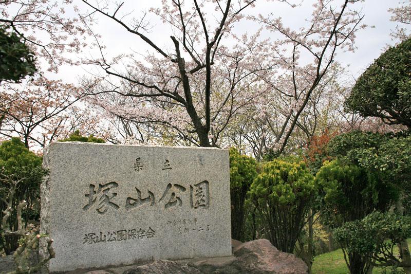 090405塚山公園桜1