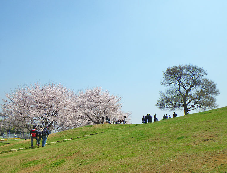 090407榎の丘と桜1