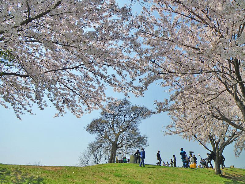 090407榎の丘と桜2