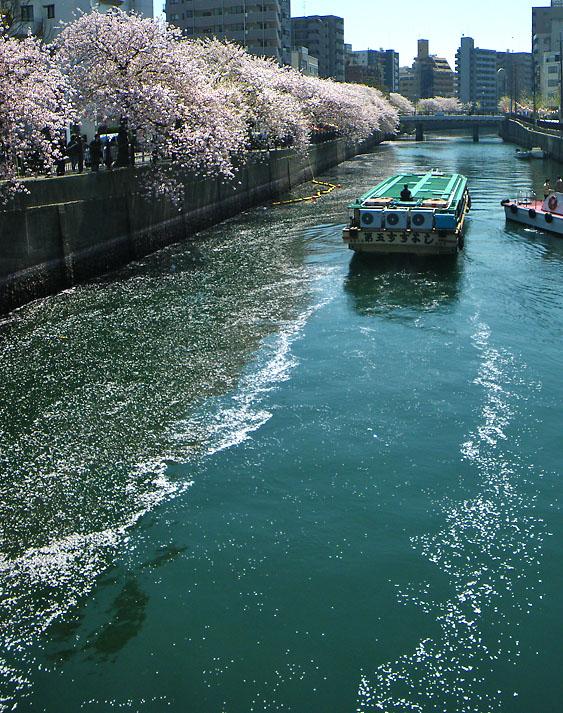 090409大岡川と屋形船4