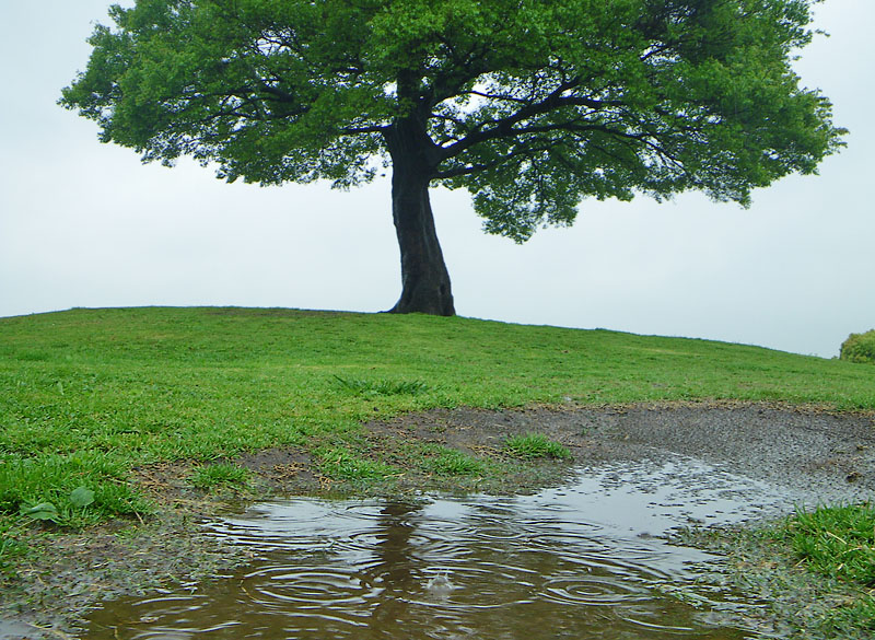 0425雨の榎の丘1