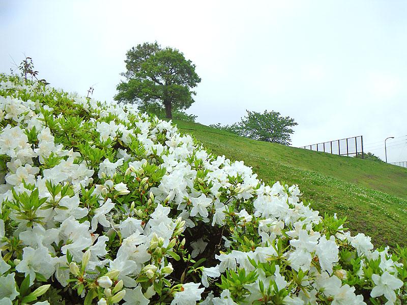 0425雨の榎の丘2