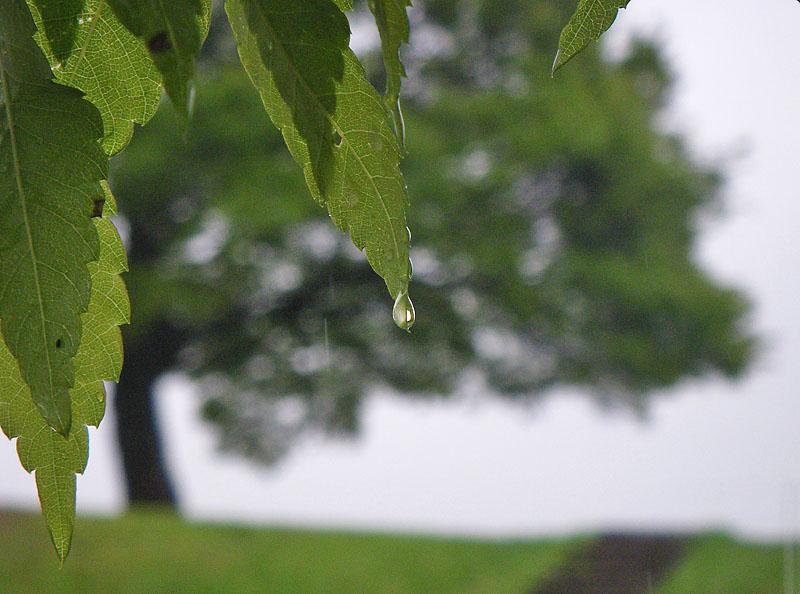 0425雨の榎の丘3