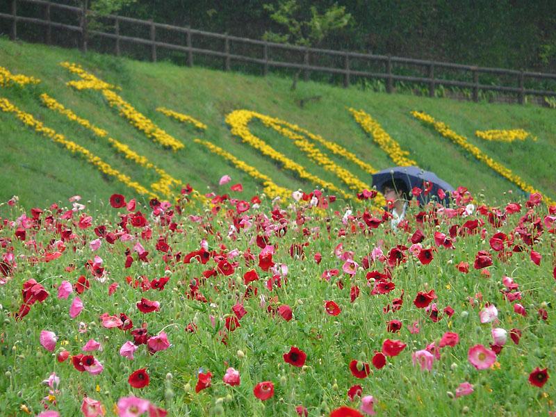 090506花の国2