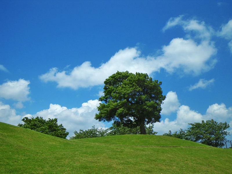 090522風の榎の丘