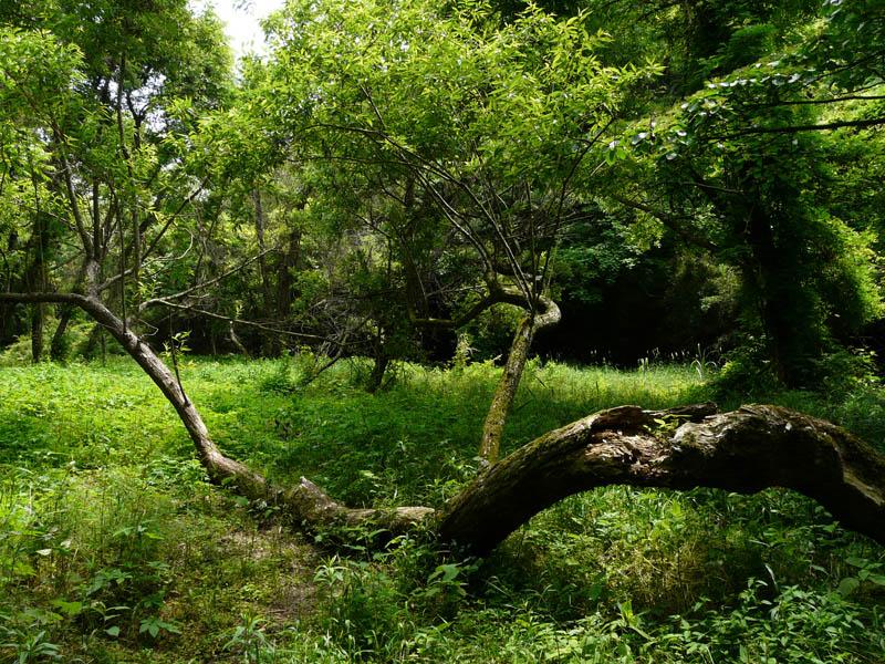 090523小網代の森1-3