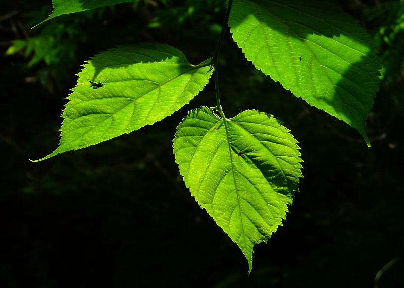 090523小網代の森1-4