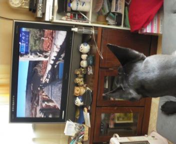 ジンとテレビ