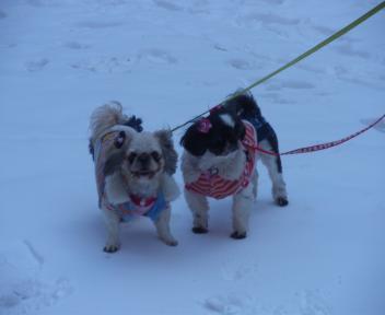 雪の中のチビ達