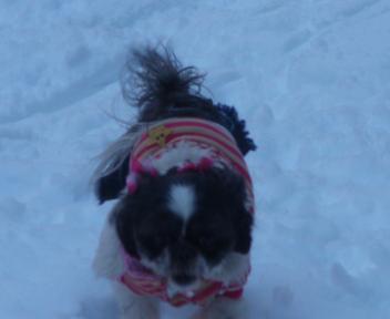雪の中走るコロン