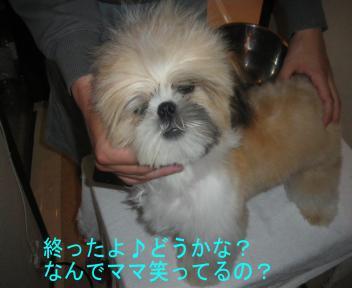 犬泉君?!