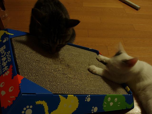 猫20080905 001-1