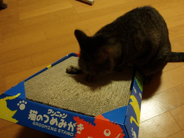 猫20080905 005-1