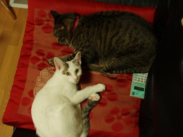 猫20080928 013-1