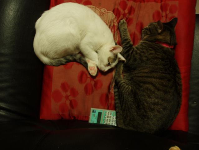 猫20080928 014-1