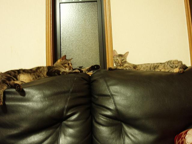 猫20080928 005-1