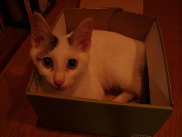 猫20080825 009-1