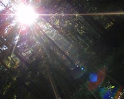 光のダンス2