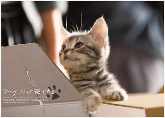 グーグーだって猫である