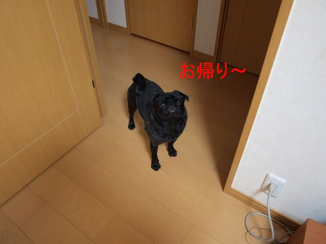 s-2009_0306hime0001.jpg