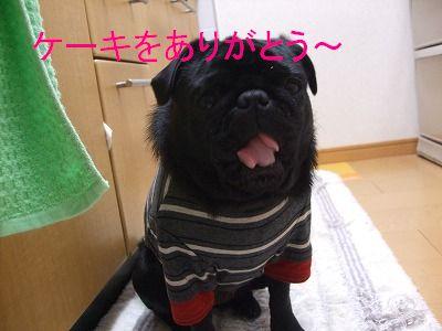 s-2009_0313hime0026.jpg