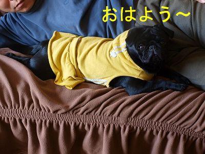 s-2009_0315hime0046.jpg