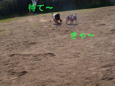 s-2009_0321hime0013.jpg