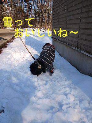 s-2009_0329hime0049.jpg