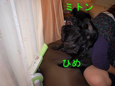 s-2009_0411hime0045.jpg