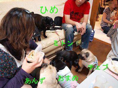s-2009_0411hime0055.jpg